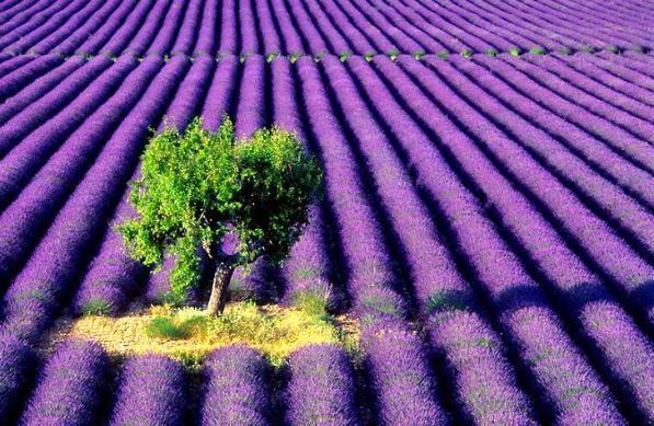 Foto: gardenofeden.blogspot.com