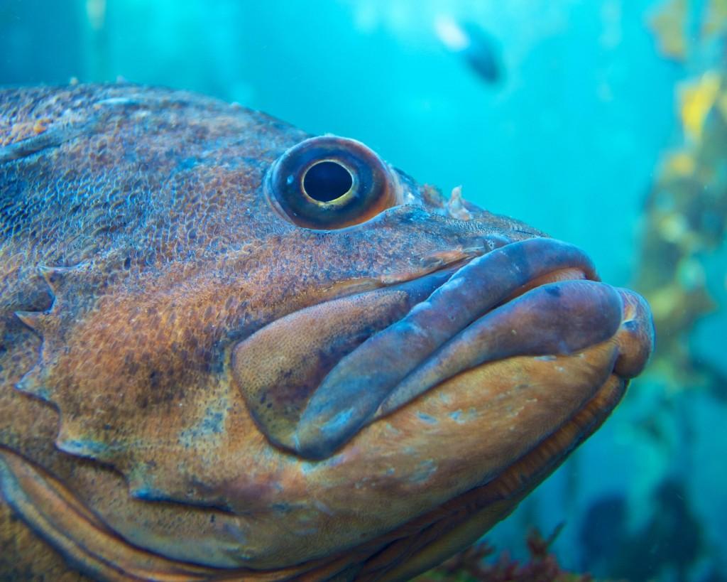 fiskehitlisten