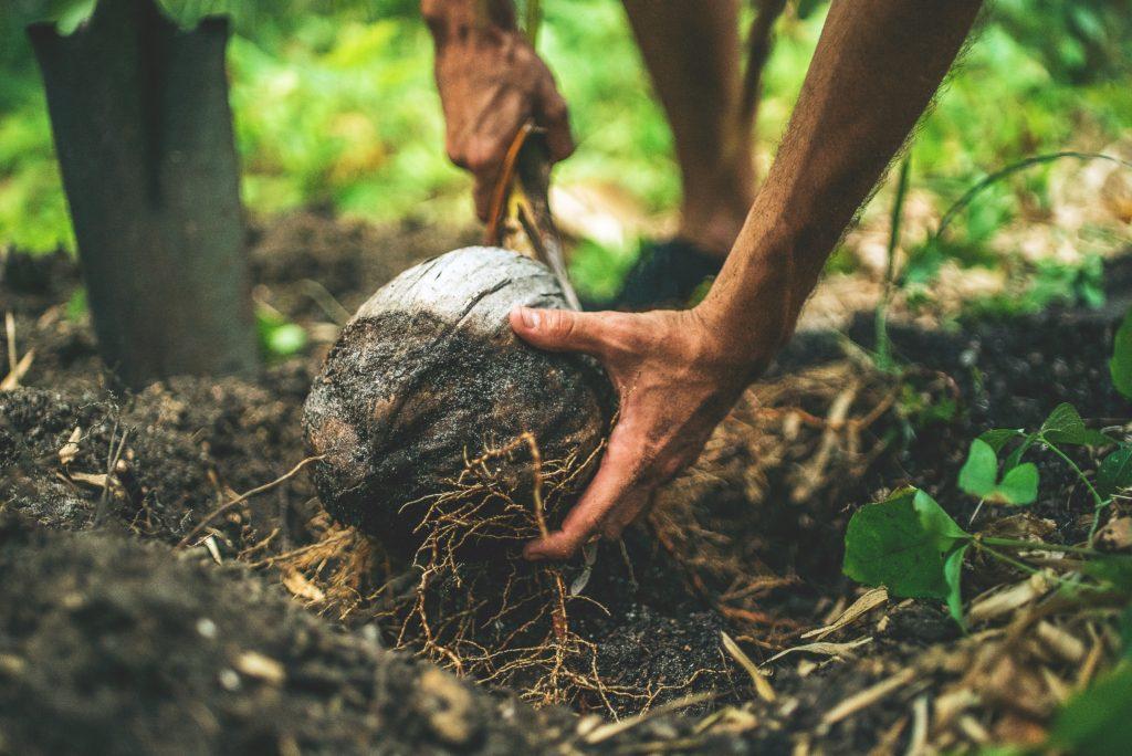 er kokosolie sundt