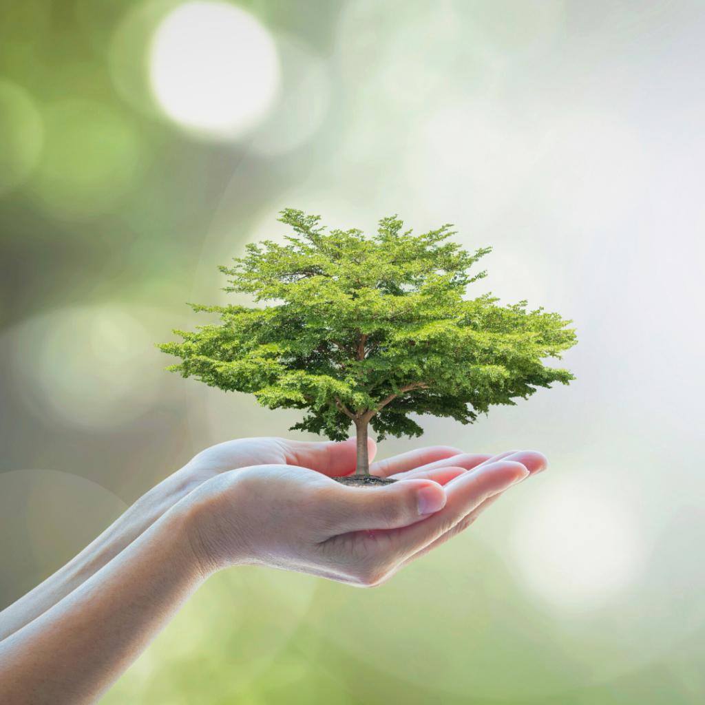bæredygtig helhed